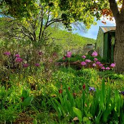 garden flowers freetoedit beautiful cottage