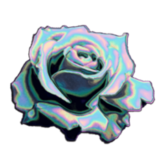 rose roses asthetic flower flowers freetoedit