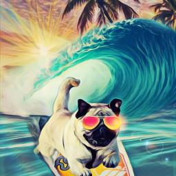 freetoedit ircflyingpug flyingpug surfing tropical