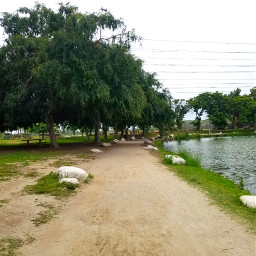 park lake walkway walkingmydogs