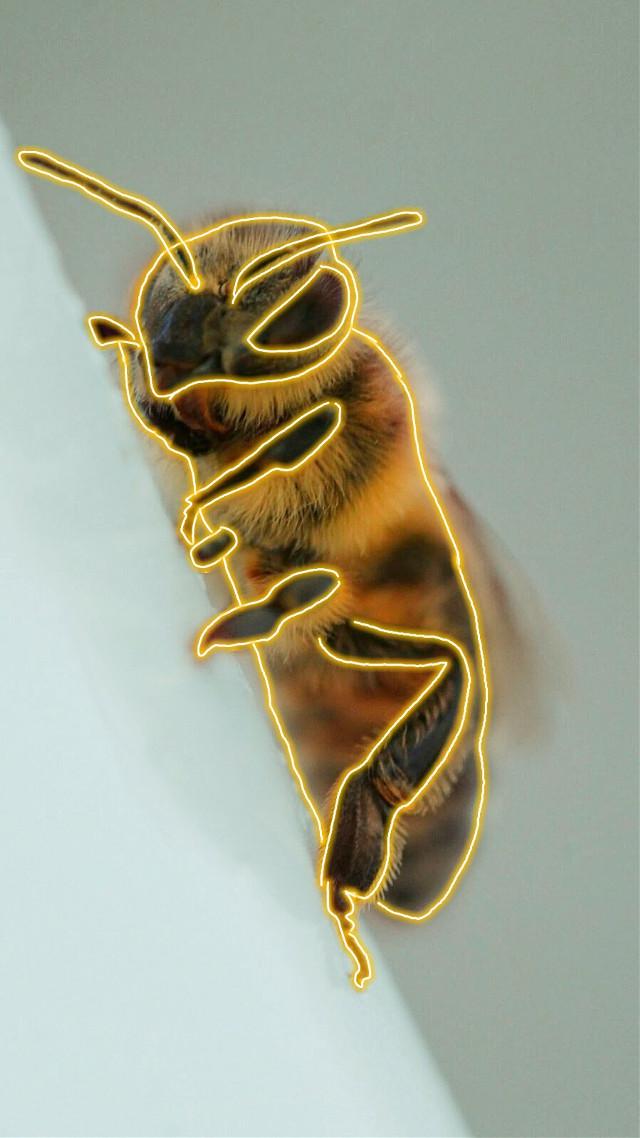 #freetoedit #bee #yellow #neon