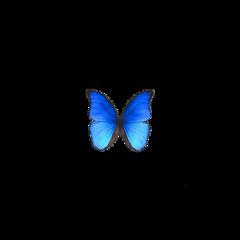 buttefly freetoedit
