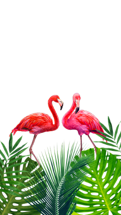tropical leaves flamingos freetoedit