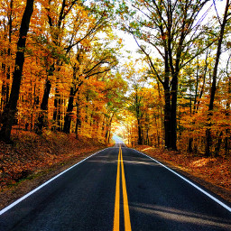 nature foret automne lumière orange freetoedit