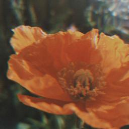 freetoedit peddles drama flowers myphotography