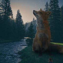freetoedit fox magic nature magicfox