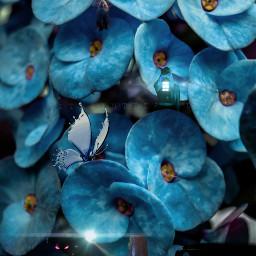 freetoedit blue blueeffect myworld fairy ircbluehue