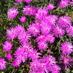 freetoedit pccolorsofnature colorsofnature fleurs dubrootsgirlphotographie pcrurallife
