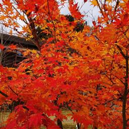 freetoedit autumn naturephotography