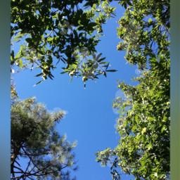 sky skyblue skyline tree treeart