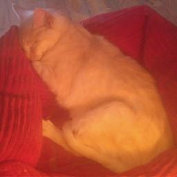 freetoedit animals cats cat