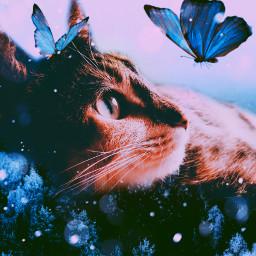 freetoedit catsofpicsart surreal picsart naturephotography cat creative imagination tumblr remixit remixed