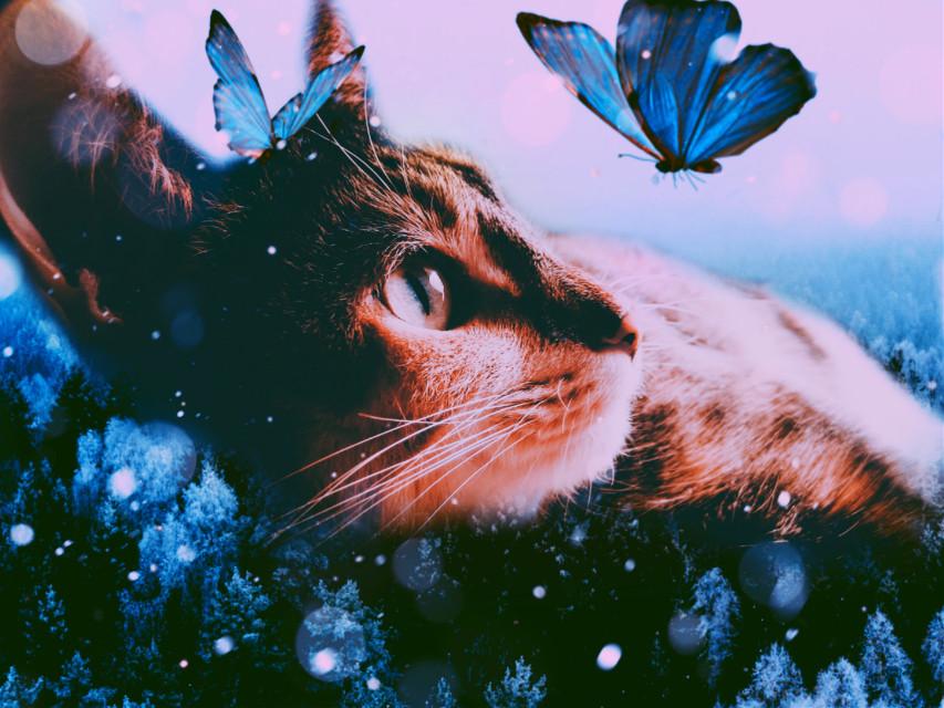 #freetoedit #catsofpicsart #surreal #picsart #naturephotography #cat#creative #imagination #tumblr#remixit #remixed