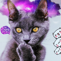 freetoedit madewithpicsart picsart photgraphy cat