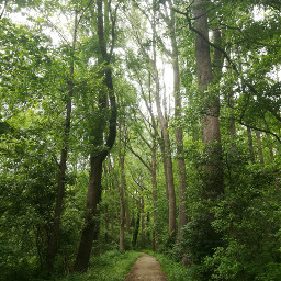 freetoedit forest trees forestroad nature