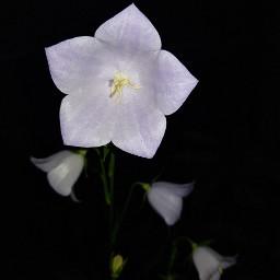 noedit noedited nofilter pcblackbackground blossom
