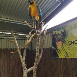 zoo challenge birds parrots beautiful freetoedit pczoo