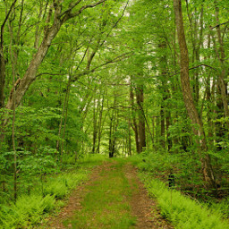 freetoedit naturephotography forestroad greentrail