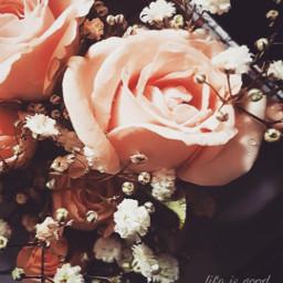 flower nature vintagephoto