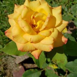 freetoedit remix flowers bright inmyneighborhood