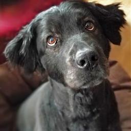 freetoedit furbaby lovemydog doglover dogloveforever