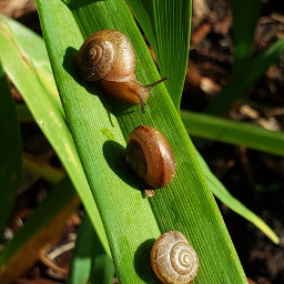 freetoedit snails nature colorful photography
