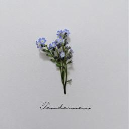 freetoedit flower forgetmenot