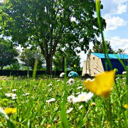 freetoedit taiz tents camping meadow pccampday