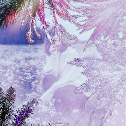 freetoedit ircpalmtrees palmtrees