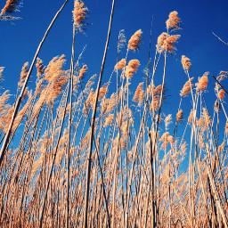 freetoedit bluesky nature grassland photography