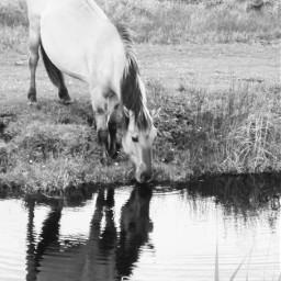 horse reflection animal photography animalphotography