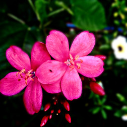 photography naturephotography flowerlover