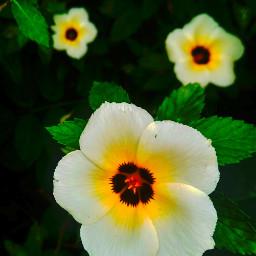 nature beautifulview flowerday morningphoto