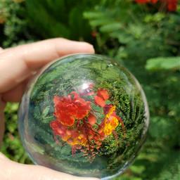 freetoedit crystalball flowers bright inmyneighborhood