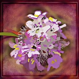 dcflowersaround flowersaround