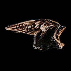 wings wing bird freedom brown freetoedit
