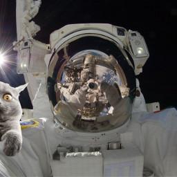 weird funnyface cat astronaut freetoedit srcfluffycat