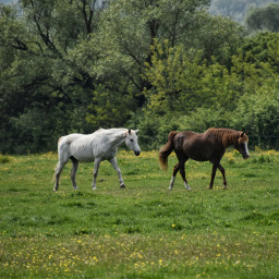 horses field stable nature pconthefarm