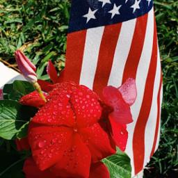 flag redwhiteandblue flowers bright inmyneighborhood pcflagday