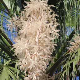 freetoedit palmtrees flowers onmystreet canonphotography
