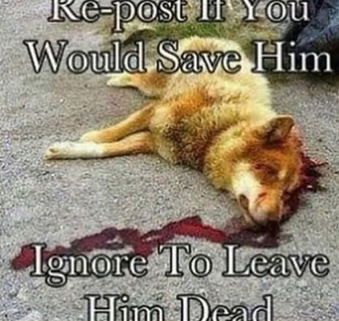 #freetoedit save him!!!!