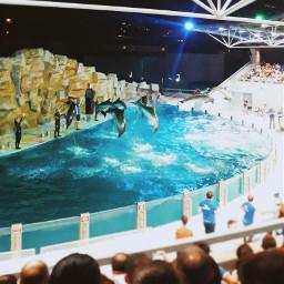 freetoedit pcseacreatures seacreatures dolphins dolphinarium pcaquarium