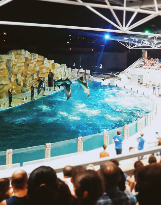 #dolphins #dolphinarium  #freetoedit  #pcaquarium