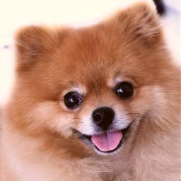 dogsofpicsart freetoedit sweetbutpsycho doggylove petphotography