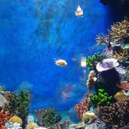 freetoedit naturephotography myphotography pcaquarium aquarium