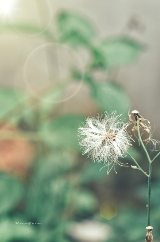 #nature #minimalist #natureminimalist