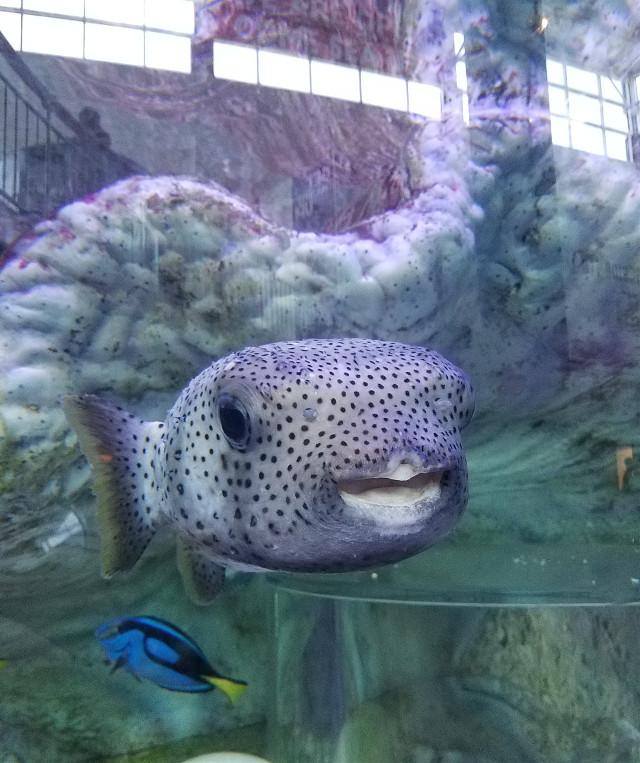 Taken at Ripley's Aquarium in Myrtle Beach SC. #aquarium #fish #ripleysaquarium #myrtlebeach #SouthCarolina #beach