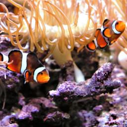 freetoedit pcaquarium aquarium