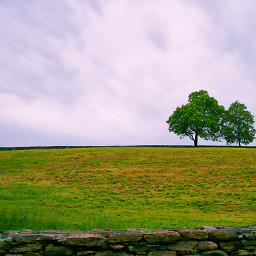 freetoedit naturephotography farmland trees roadtrips