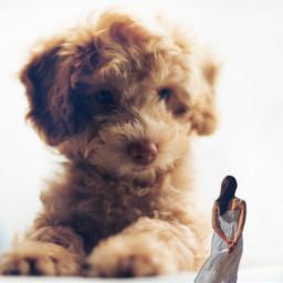 freetoedit ectinypeople tinypeople puppy woman